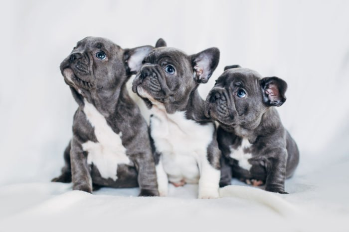 splendidi cuccioli