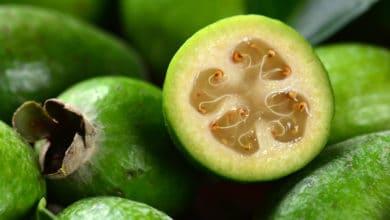 Photo of Feijoa: proprietà del frutto e ricetta della marmellata