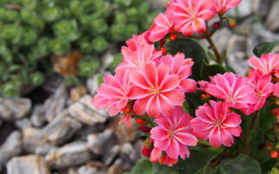 Piante resistenti al freddo le 5 piante pi forti in inverno tuttogreen - Piante grasse da esterno in inverno ...