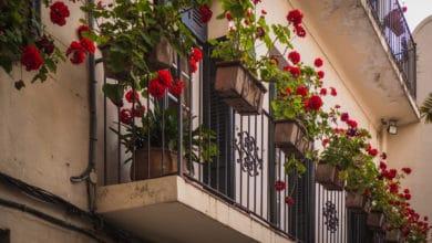 Photo of La guida pratica alle piante da balcone: come sceglierle e curarle al meglio