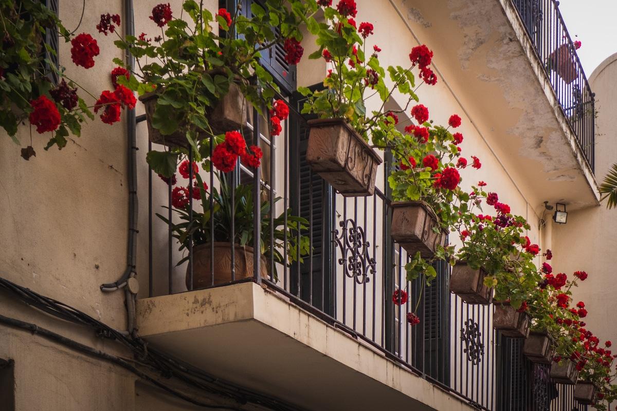 Fiori Perenni Da Balcone le piante da balcone: quali sono le varietà più adatte?