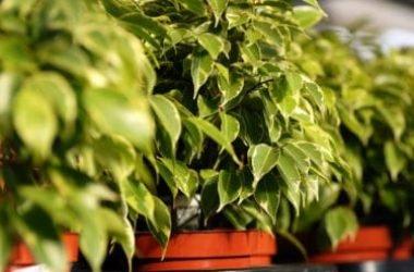 Quali sono le piante che purificano l'aria di casa? La guida pratica