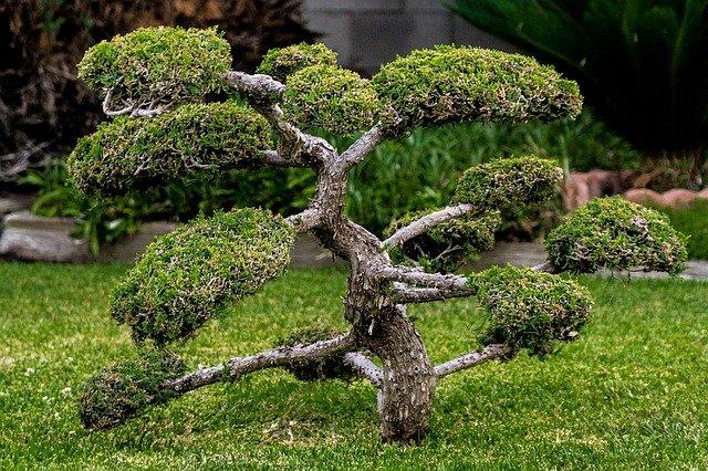 giardino giapponese zen