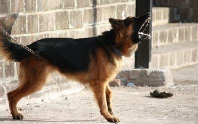 Eccovi le razze di cani da guardia e da difesa più popolari ed apprezzate