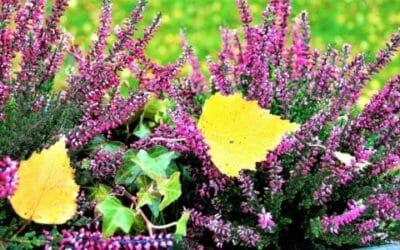 Le piante facili da coltivare per chi non ha il pollice verde