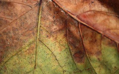 Ruggine delle piante: rimedi naturali, cure e consigli utili