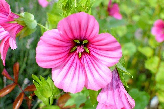 Piante perenni aree del giardino variet e coltivazione for Piante da giardino perenni pieno sole