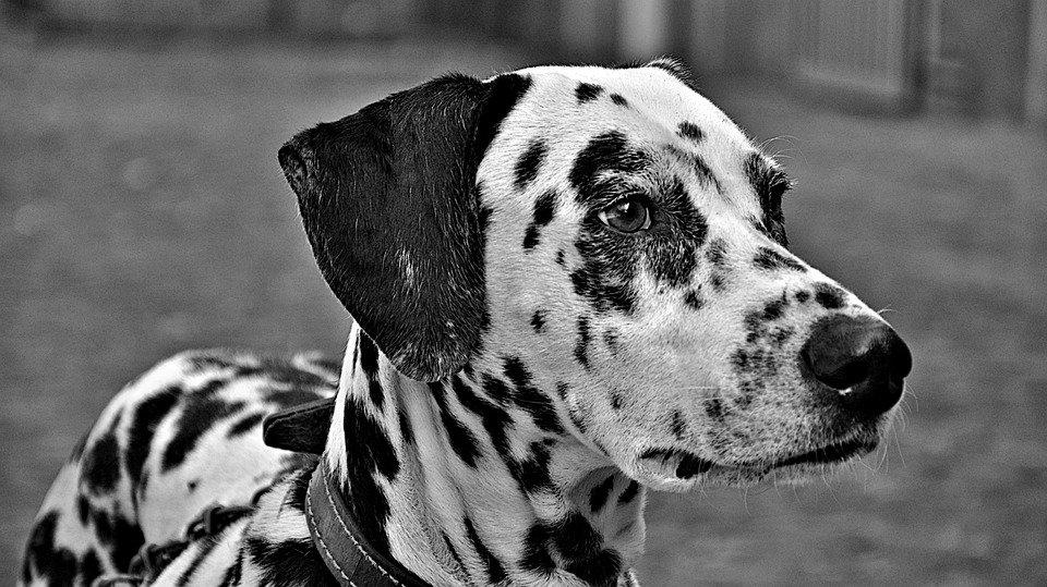 Photo of Nomi per cani: qual è il nome perfetto per il tuo pet?