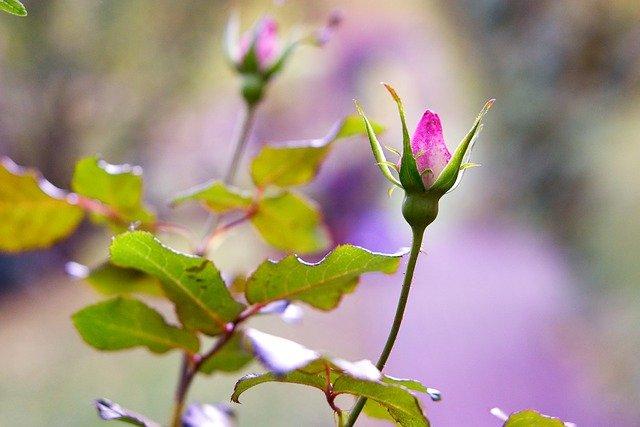 Photo of Ruggine delle piante: rimedi naturali, cure e consigli utili