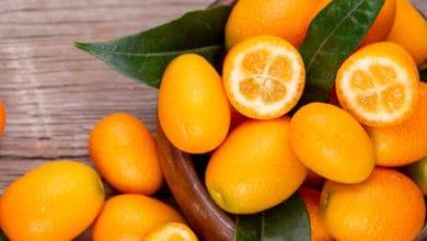 Photo of Proprietà e benefici del kumquat, noto anche come mandarino cinese