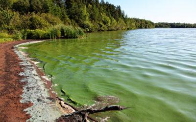 Alga Klamath: benefici, caratteristiche distintive e utilizzi