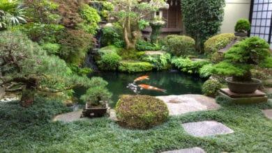 Photo of Alla scoperta del giardino giapponese zen: cos'è e come si crea