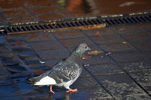 Photo of Tutti i metodi naturali per allontanare i piccioni dai balconi e davanzali di casa