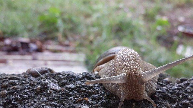 lumache riproduzione