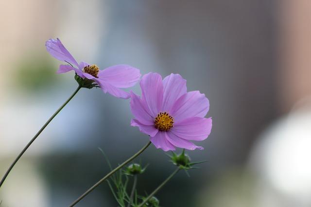 piante biennali