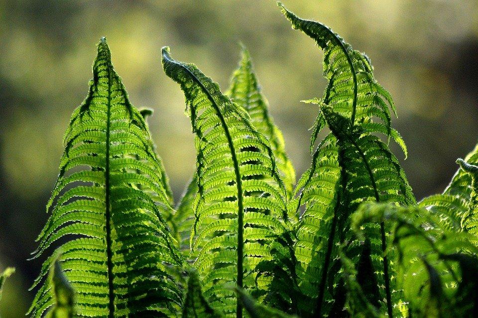 Photo of Capelvenere: tutto su questa pianta appartenente alla famiglia delle felci