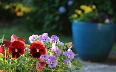 Piante da giardino le variet pi belle e semplici da for Piante belle da giardino