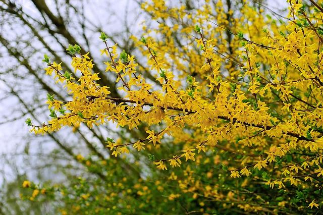 Arbusti Decorativi Da Giardino : Arbusti da giardino varietà caratteristiche e coltivazione