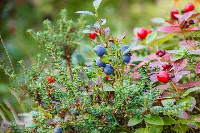 Piante da giardino le varietà più belle e semplici da coltivare