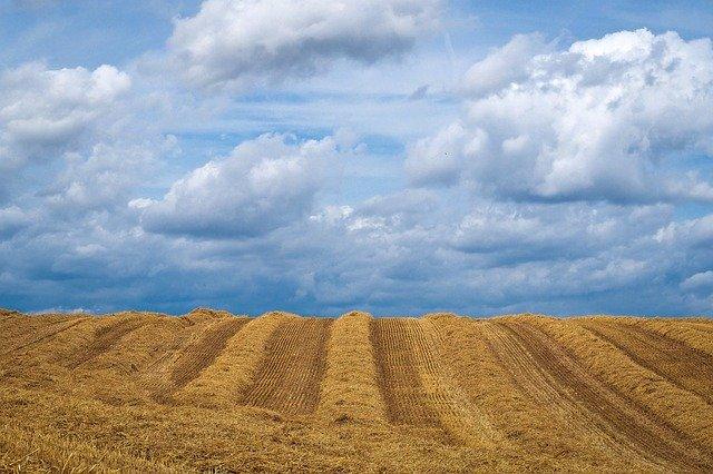 terreno per semina