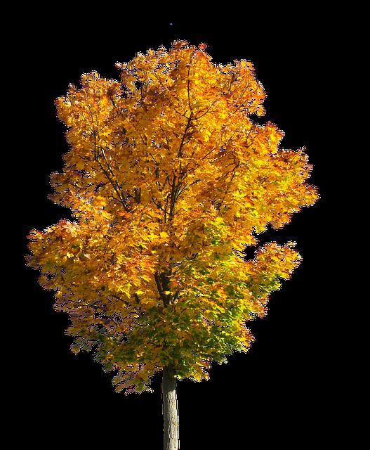 Alberi da giardino quali sono come coltivarli e curarli for Alberi simili alle querce