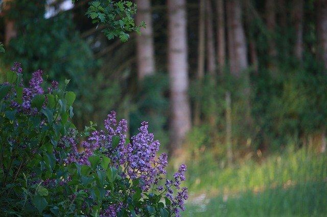 arbusti da giardino