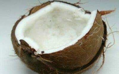 Noce di cocco: come aprirla, proprietà benefiche e controindicazioni