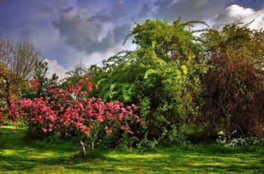 Arbusti da giardino: varietà, caratteristiche e coltivazione
