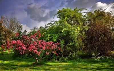 Siepi Da Giardino Fiorite : Arbusti da giardino varietà caratteristiche e coltivazione