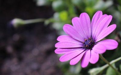 Piante annuali: varietà, coltivazione e cure