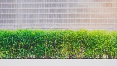 Photo of La guida alle piante da siepe: tutti i segreti per una barriera vegetale perfetta