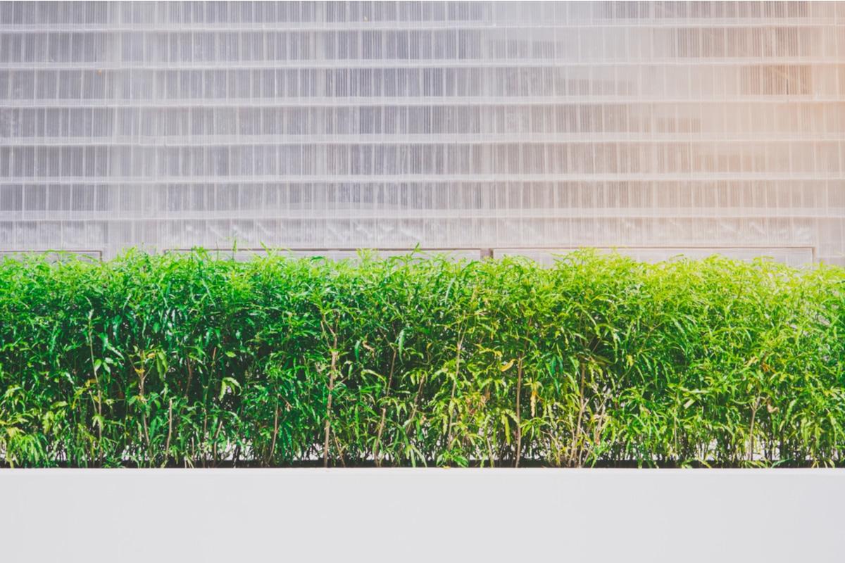 Piante Da Frutto Sempreverdi piante da siepe: quali sono e come coltivarle, in giardino o
