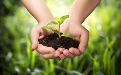 Cos'è l'agricoltura forestale? principi base ed applicazioni