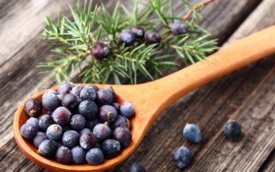 Proprietà della bacche di ginepro: in cucina e come liquore