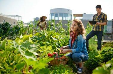 Come proteggere un orto urbano dallo smog