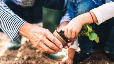 Photo of Piante da giardino: le varietà più belle e semplici da coltivare