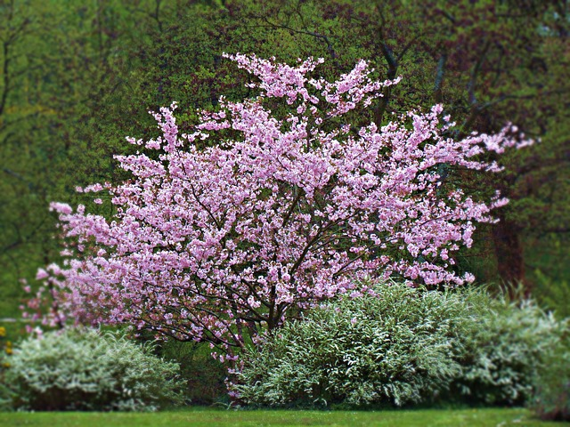 Arbusti da giardino variet caratteristiche e for Piante da giardino perenni pieno sole