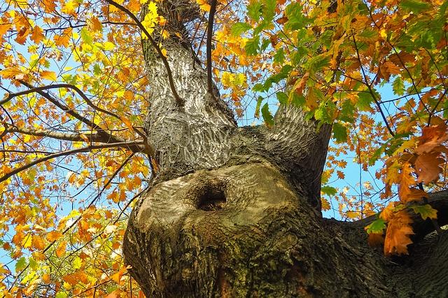 Alberi da giardino quali sono come coltivarli e curarli tuttogreen - Migliori alberi da giardino ...