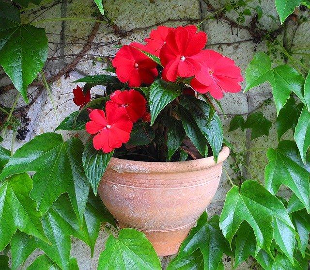 Piante perenni aree del giardino variet e coltivazione for Piante fiorite perenni da esterno