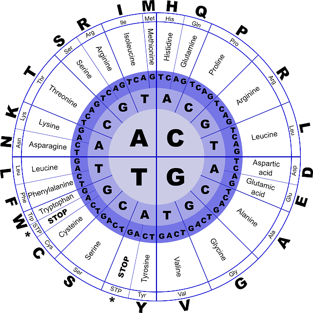 aminoacidi quali sono