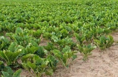 Quello che possiamo coltivare nell'orto in autunno: verdure ed erbe aromatiche al top