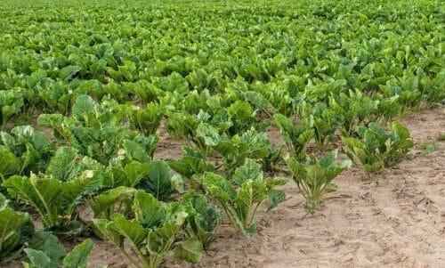 orto in autunno: cosa coltivare