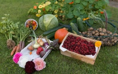 Orto in autunno: cosa coltivare per avere ortaggi e verdure a km zero