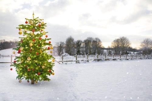 albero di Natale dai da te