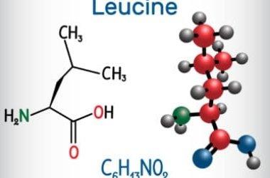 Leucina, un aminoacido essenziale molto importante specie per lo sportivo