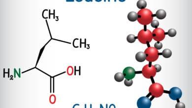 Photo of Leucina, un aminoacido essenziale molto importante specie per lo sportivo