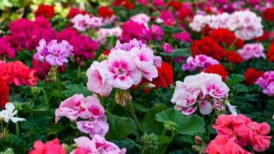 Photo of Quali sono le piante facili da coltivare per chi non è esperto? La guida pratica