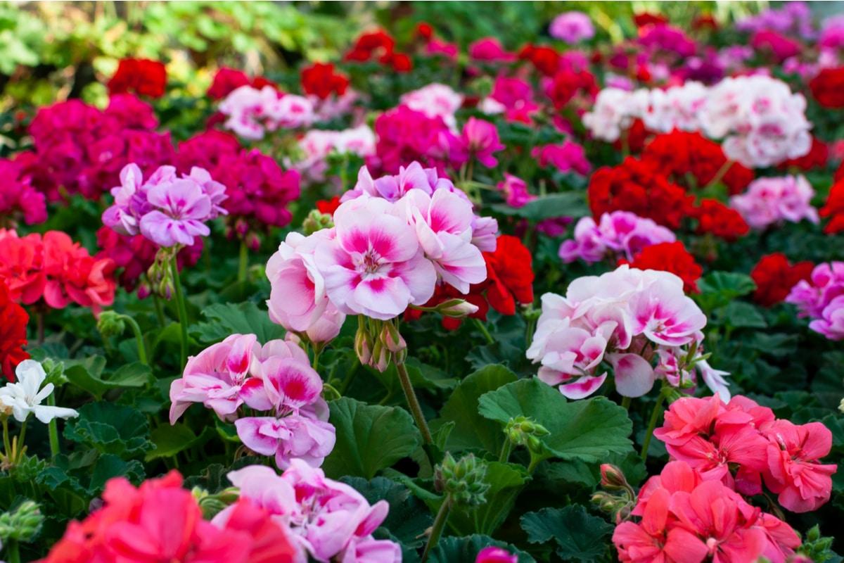 Tronchetto Della Felicità Da Esterno le piante facili da coltivare per chi non ha il pollice verde