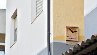 Photo of Bat box, ovvero le casette per i pipistrelli