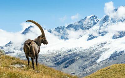 Parchi Nazionali e Parchi Naturali Italiani: quanti e dove sono?